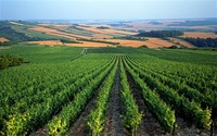 05/20/11 - Discover & Savor French Wines from the Famous Champagne, Bordeaux and Burgundy Regions